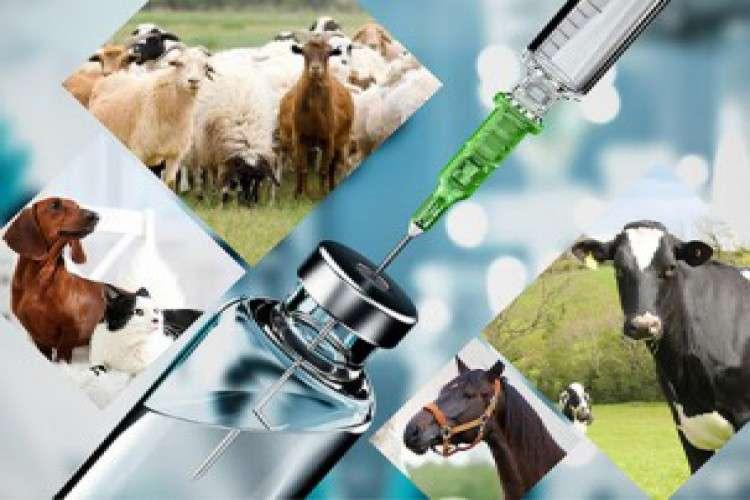 Best veterinary pharma franchise company in india