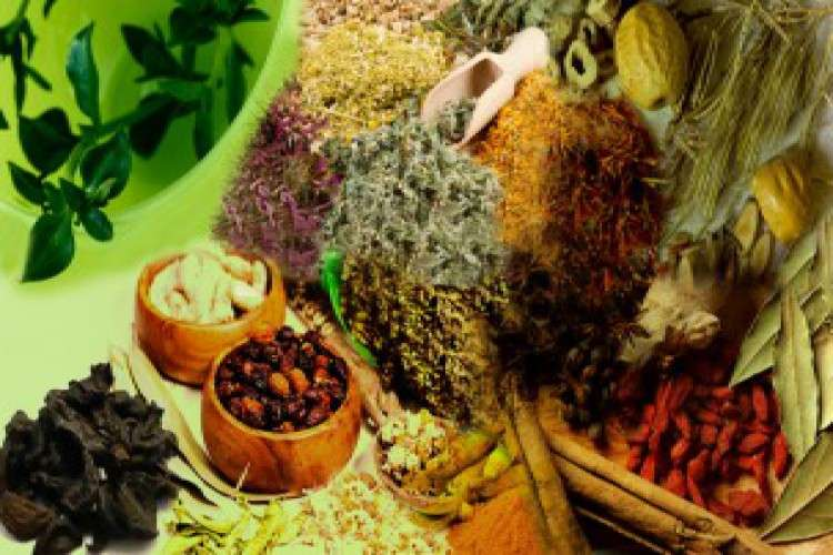 List of top ayurvedic pcd companies in india