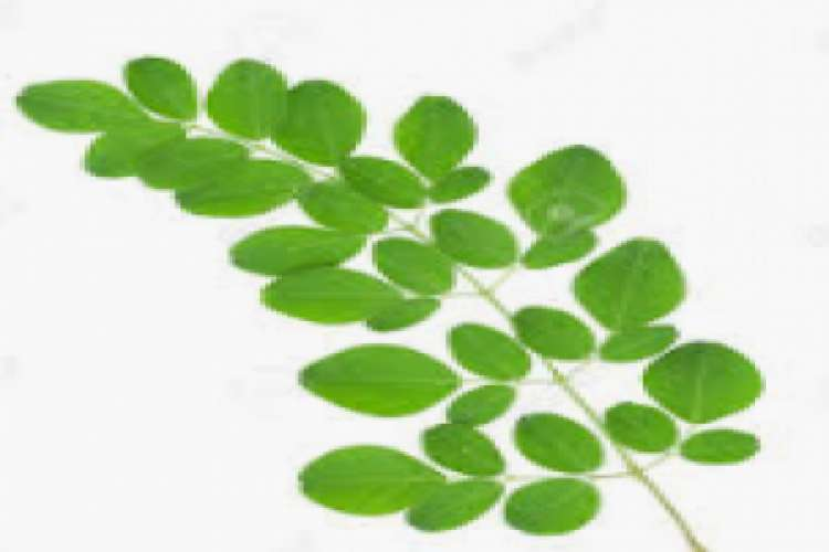 Moringa organic capsule and powder in india for home delivery