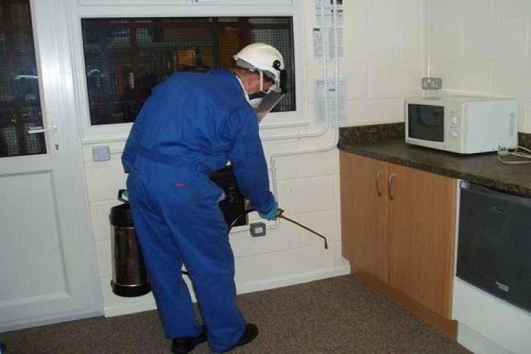 pest-inspection-pest-fumigation_162764477010.jpg